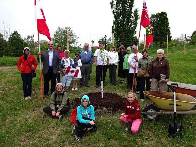 Celebration Tree Plant