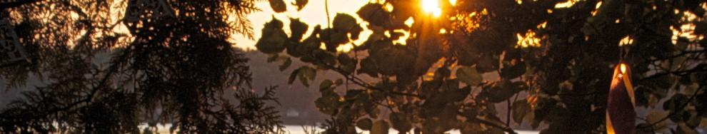 cropped-DSC_39791.jpg